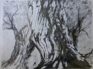 Olivenbaum 1 Lithographie
